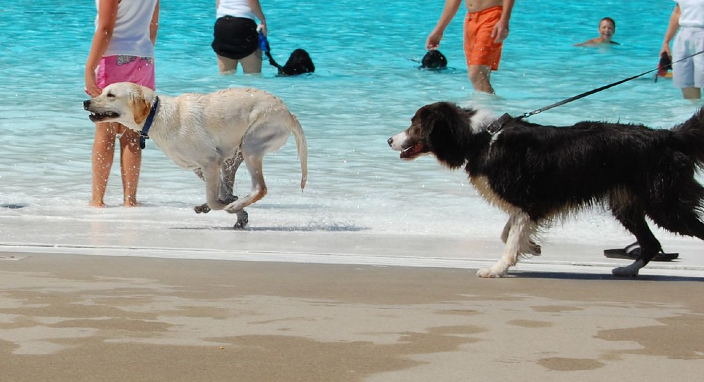 Tips to Own a Dog Daycare Franchise